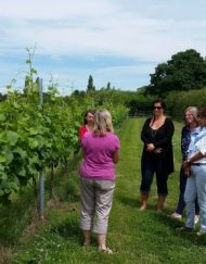 Group Vineyard experience
